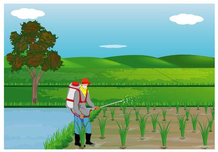 The farmer spray rice plant vector design