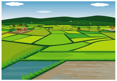 grande disegno vettoriale di campo di risaia