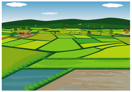 big paddy field vector design
