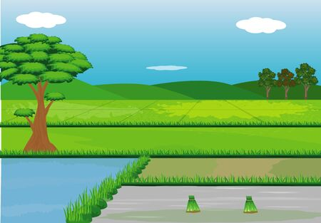 Paddy field vector design.