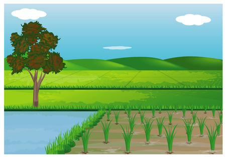 rijstveld vector design