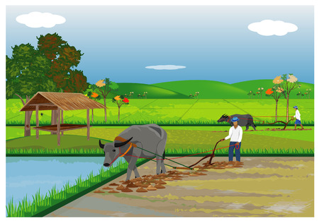Farmer plow in paddy field vector design Illustration