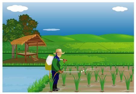 boer spuit rijstplant in rijstveld vector ontwerp