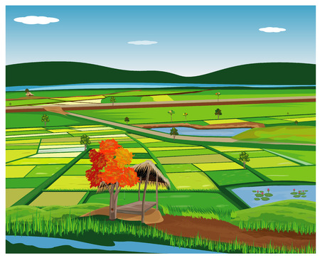 large paddy field with hut vector design