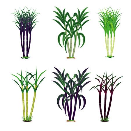 conception de vecteur de plante de canne à sucre Vecteurs