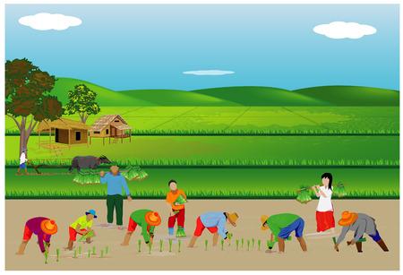 framer transplant rice in paddy field vector design Stock Illustratie