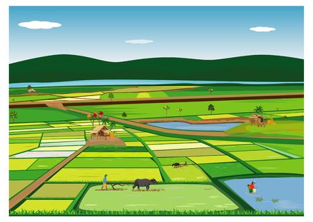 contadino aratro nel disegno vettoriale di risaia
