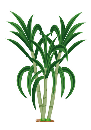 sugar cane plant vector design