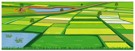 the large paddy field vector design