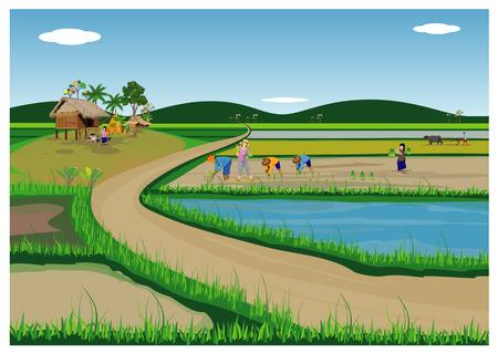 agricultor trasplante siembra de arroz en campo de arroz diseño vectorial Ilustración de vector