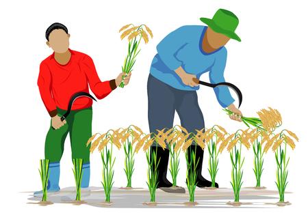 farmer harvest rice design