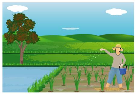 farmer sow manure in paddy field design