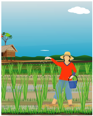 agriculteur sème le fumier dans la conception des rizières Vecteurs