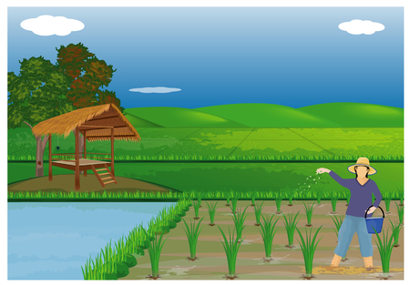 farmer sow manure for rice plant design