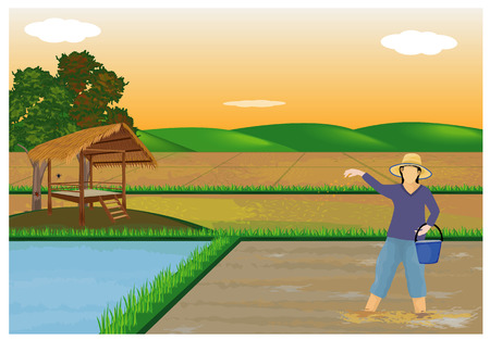 farmer sow rice in paddy field design Illustration
