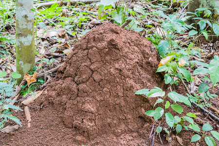 anthill in forest Imagens