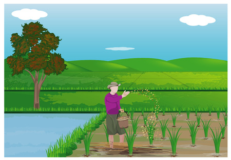 farmer sowing manure in paddy field vector design