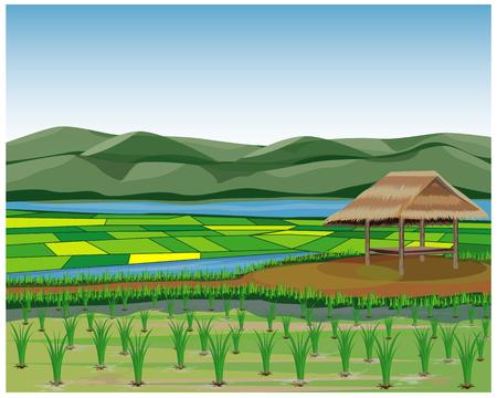 disegno vettoriale risaia