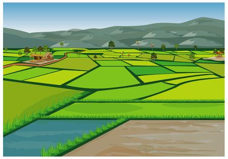 diseño de vector de campo de arroz