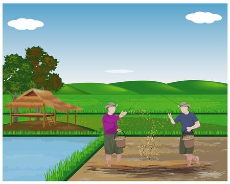 agriculteur semant du riz dans la conception de vecteur de rizière