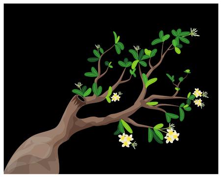 plumeria tree vector design Иллюстрация