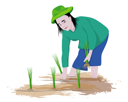 farmer transplant rice vector design