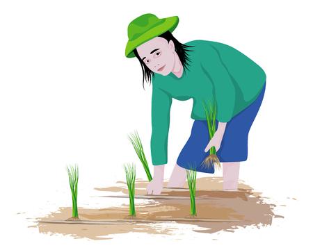 farmer transplant rice vector design