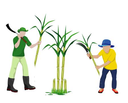 agriculturist harvest sugarcane vector design