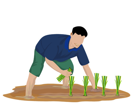 farmer transplant rice seeding vector design Vectores