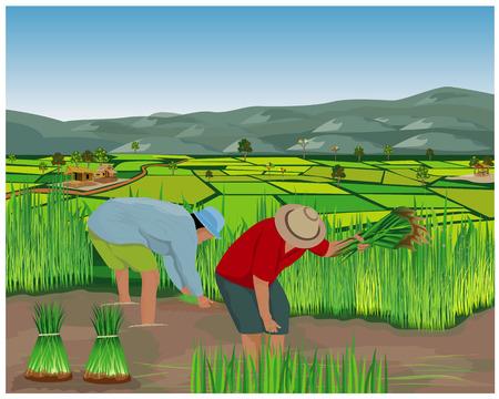 agricultor trabaja en diseño vectorial de campo de arroz Ilustración de vector