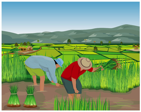 Bauernarbeit im Reisfeldvektorentwurf Vektorgrafik