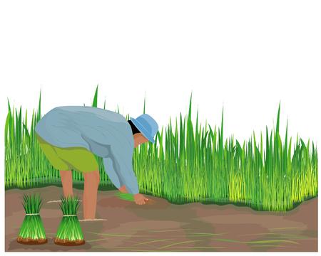 farmer work in paddy field vector design