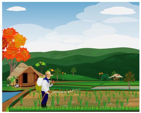 farmer spray rice plant vector design