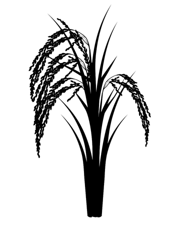 silhouette rice plant vector design