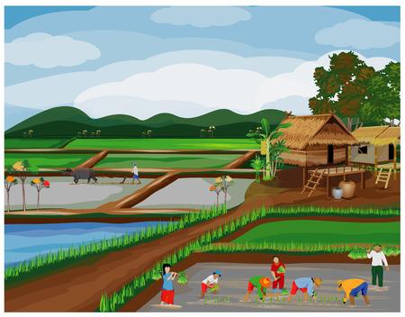 farmer transplant rice seeding vector design