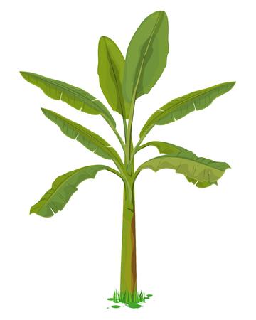 banana plant vector design