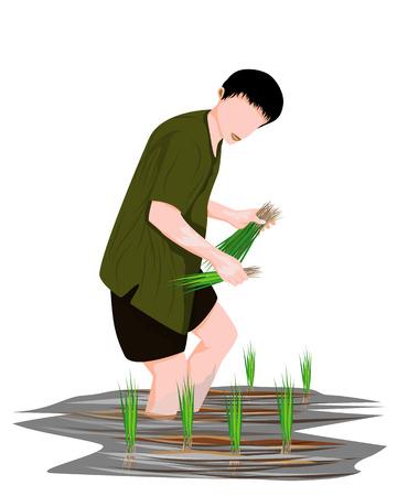 farmer transplant rice seeding vector design Stock Illustratie