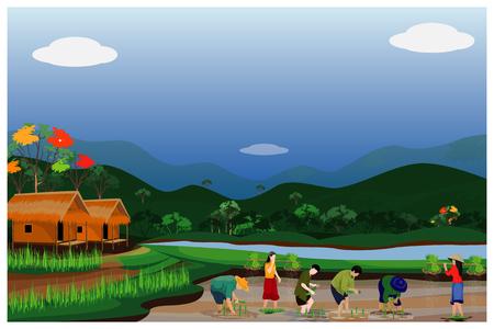 farmer transplant rice seeding in paddy field vector design