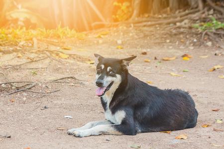 the roadside dog