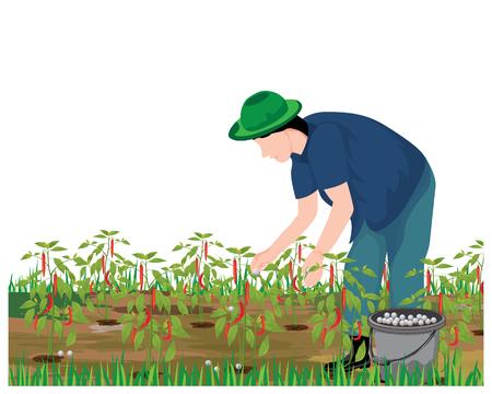 agriculturist manure chili plant vector design
