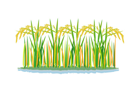 conception de vecteur de plante de riz