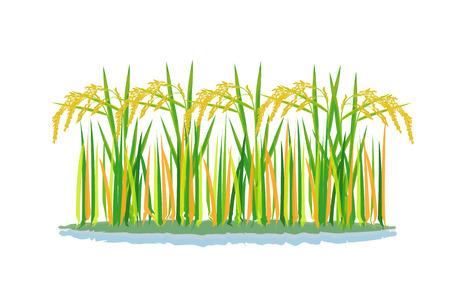 disegno vettoriale di pianta di riso