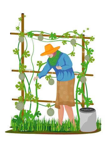 agriculturist manure melon plant vector design Stock Illustratie