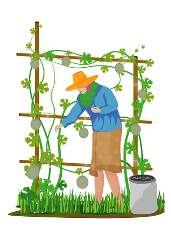 agriculturist manure melon plant vector design Illustration