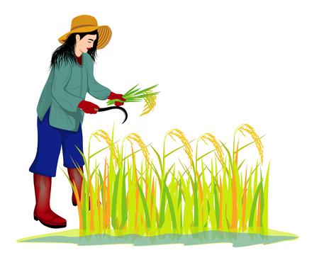 farmer harvest rice vector design Vector Illustration