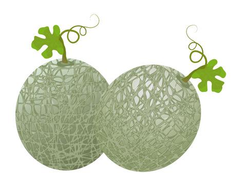 melon fruit vector design