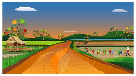 Diseño de vector de siembra de arroz de trasplante de agricultor
