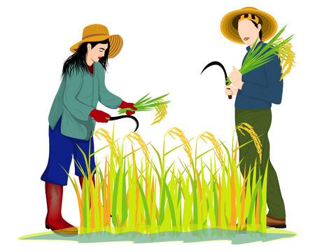 farmer harvest rice vector design