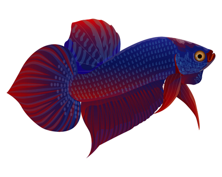 Fighting fish vector design