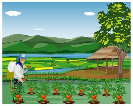 agriculturist sprays tomato plant in garden vector design